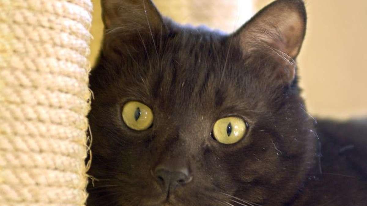 alte katzen kommen besser mit einem kratzbrett zurecht magazin. Black Bedroom Furniture Sets. Home Design Ideas